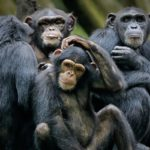 inteligencia artificial-primates